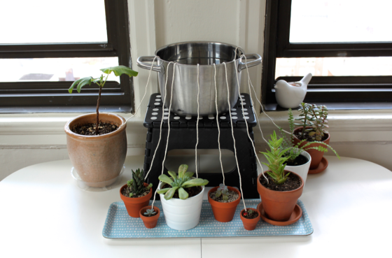 Diy Self Watering System For Houseplants Scissors Amp Sage