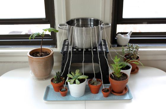 diy self watering system for houseplants scissors sage. Black Bedroom Furniture Sets. Home Design Ideas