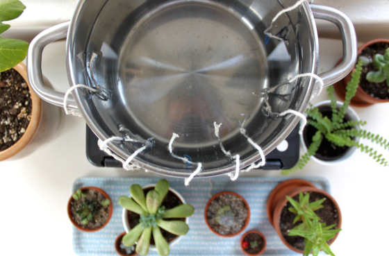 DIY Self-Watering System for Houseplants | SCISSORS & SAGE on starting system, self storage, water system, container gardening system, diy seed starter system, pvc irrigation system, building above ground sprinkler system, garden system, hydroponic gardening system, drip irrigation system, sub irrigation system,